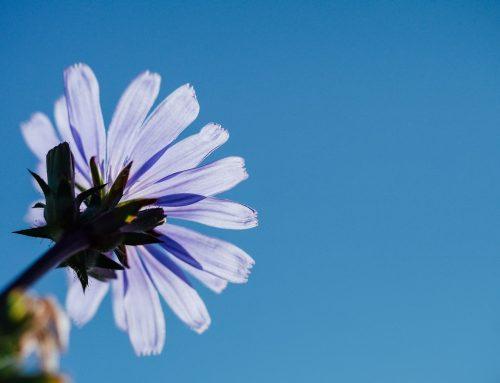 Meditación unida a las Flores de Bach y a la escritura