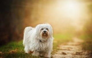 pexels-photo-257570 perro