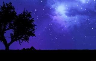 trees-night-stars-purple-silhouette