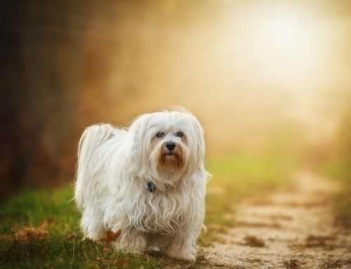 Un curso online para tu calma y auto-confianza que mejora la vida con tus animales